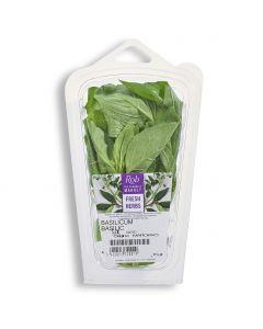 Basilicum - 20 g