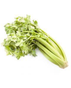 Céleri Vert