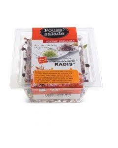 Pousses Gourmandes de Radis Bio - 50 g