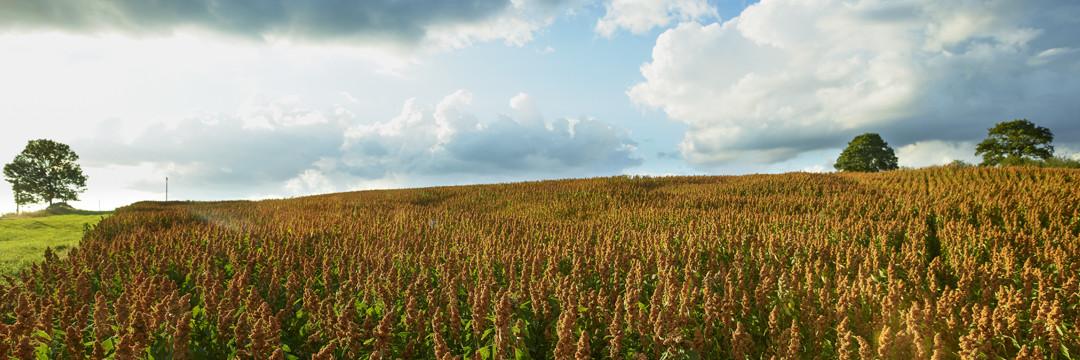 Les cultures durables de Graines de Curieux