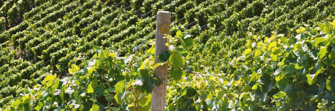 Ces vins qui osent s'affranchir du système d'appellations