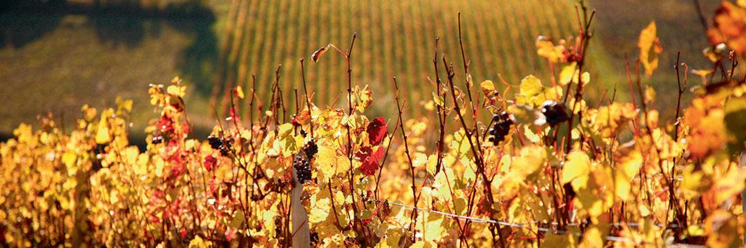 Les vins du plat pays