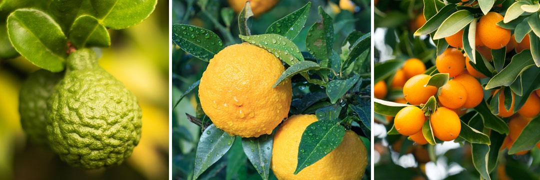 Citrusvruchten: de winter in een exotische schil!