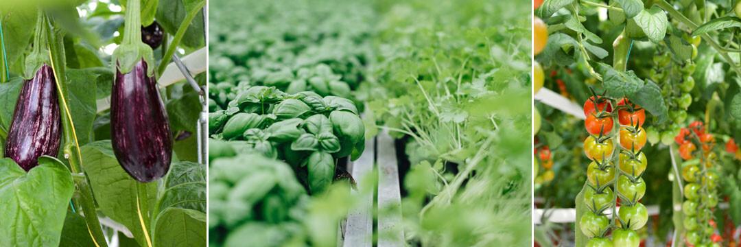 BIGH, heruitvinder van een lokale en duurzame groententeelt