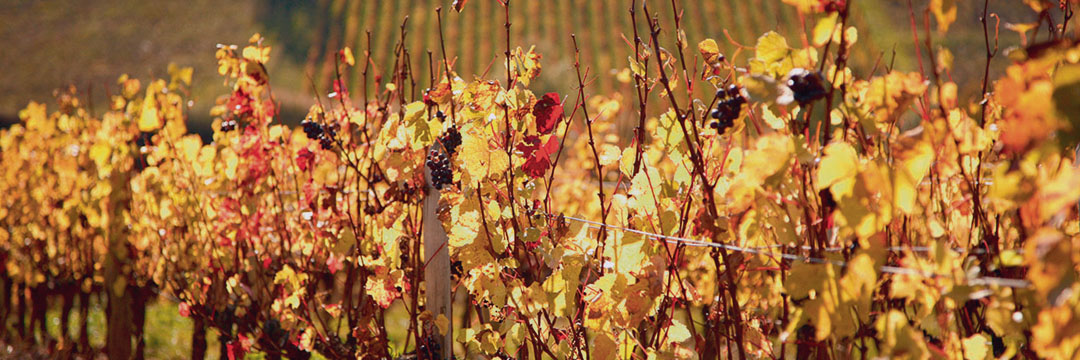 Le retour des vins de Bordeaux