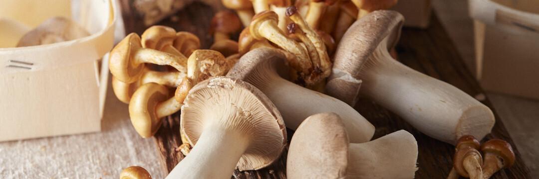 Exotische paddenstoelen, lokaal geplukt in Brussel