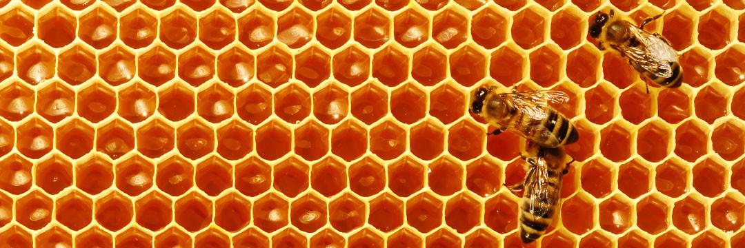 Le miel : délices en cuisine et bienfaits santé