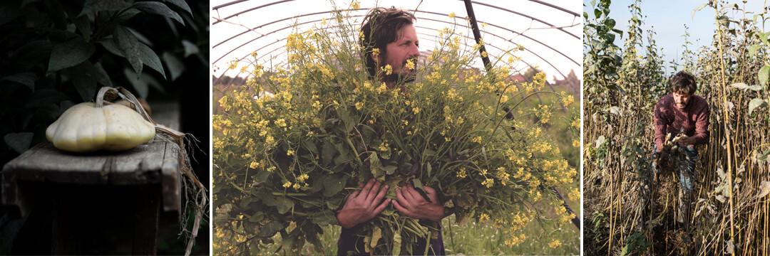 Le Monde des Mille Couleurs : la permaculture dans votre assiette
