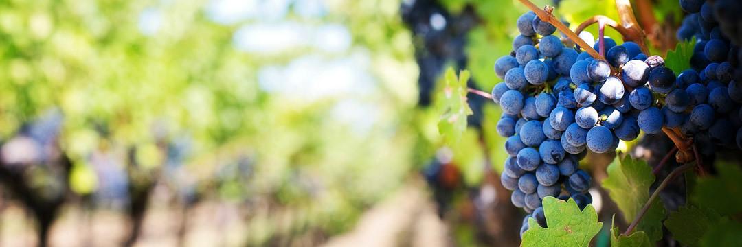 Pontet-Canet ou l'esprit du vin