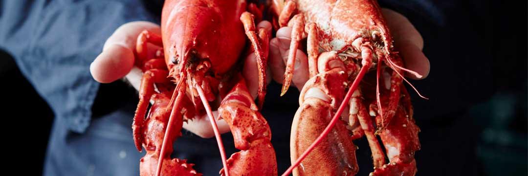 Le homard est aussi l'une de nos spécialités