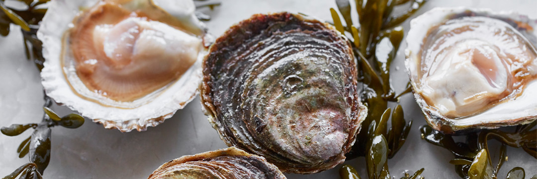 Les huîtres : un plat de fête !